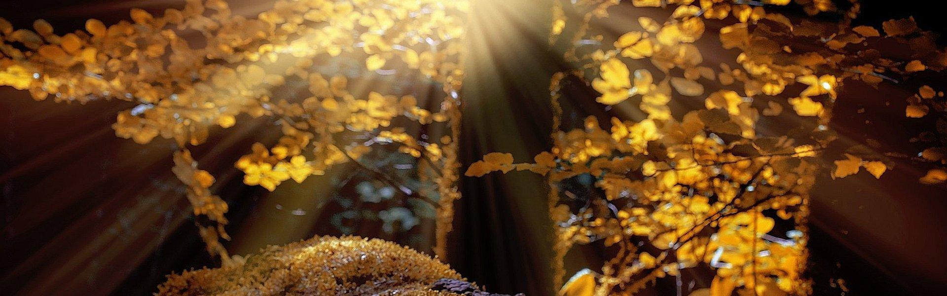 Bos in de herfst bij de column 'Alle goeds' van Paul Schrijft