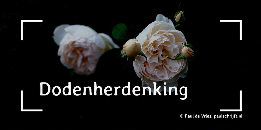 Roze rozen bij de column 'Dodenherdenking' van 'Paul Schrijft' foto door Takashi M