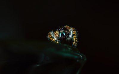 Een kleine spin