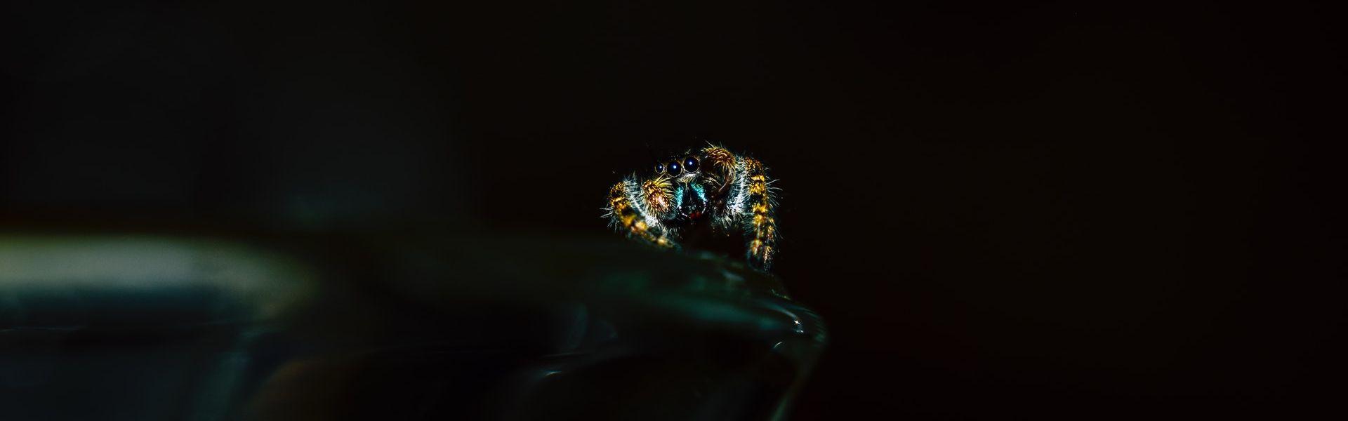 Een kleine spin bij een versje van Paul de Vries Schrijft. Foto Chris F op Pexels