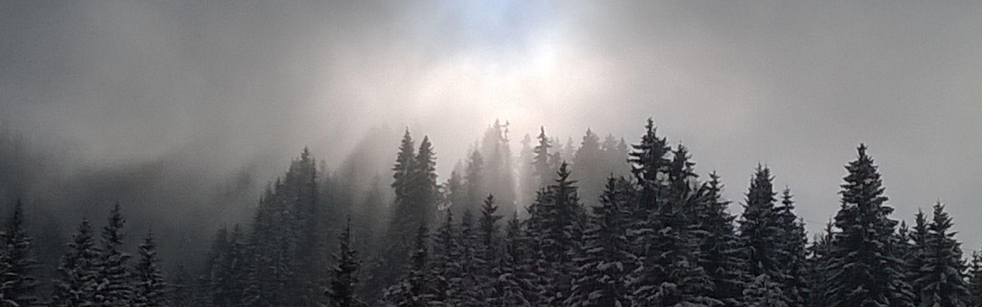 Besneeuwde bomen in de mist bij het versje 'Hoop' van Paul de Vries