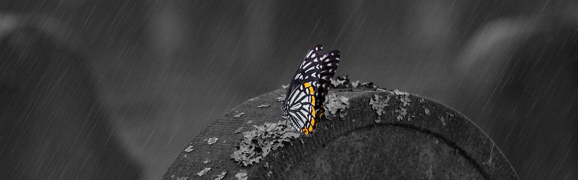 Vlinder op een grafsteen bij het versje 'Laatste ademhaling' van Paul Schrijft