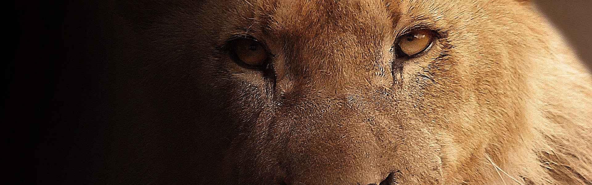 Leeuw bij het versje 'Vaderdag' van Paul Schrijft