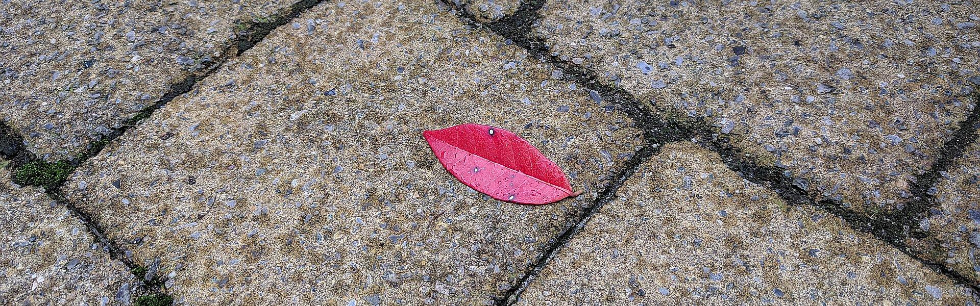 Een rood blad op de stoep dat lijkt op rode lippen op beton