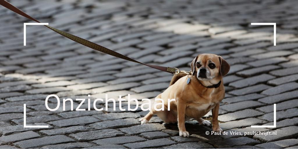 Hondje aan een riem