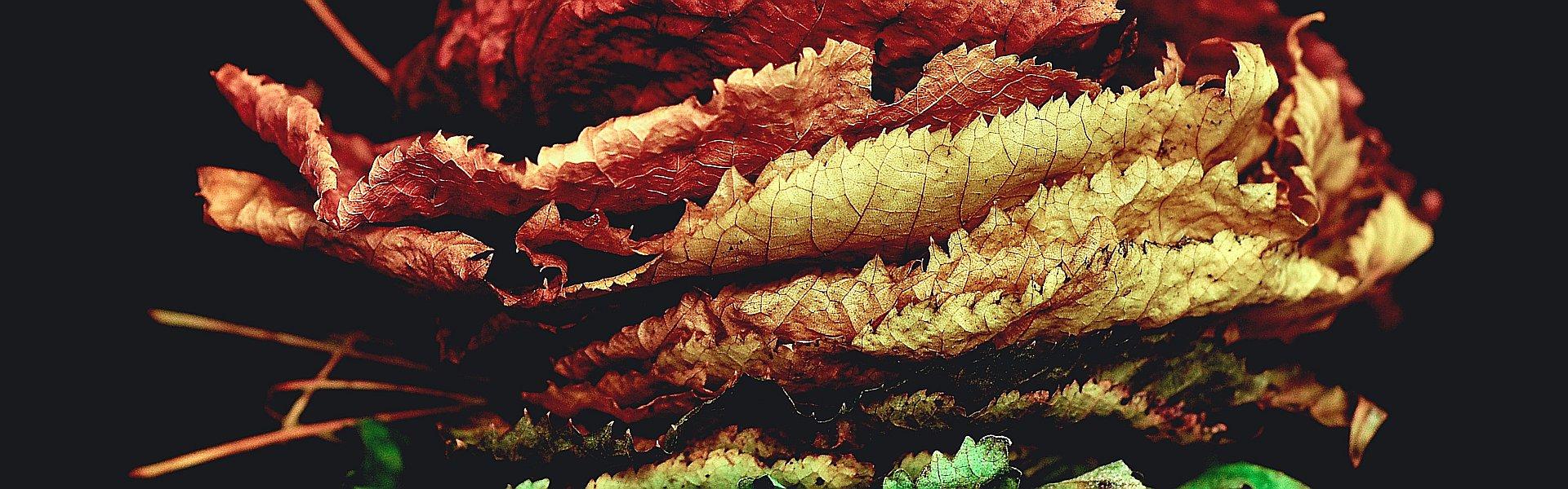 Stapeltje gekleurde herfstbladerenStapeltje gekleurde herfstbladeren