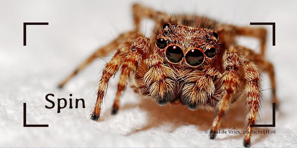 Een spin bij het versje van Paul Schrijft