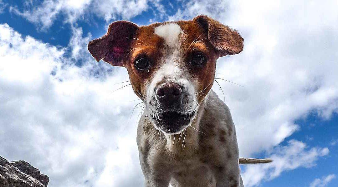 Het hondje uit mijn dromen