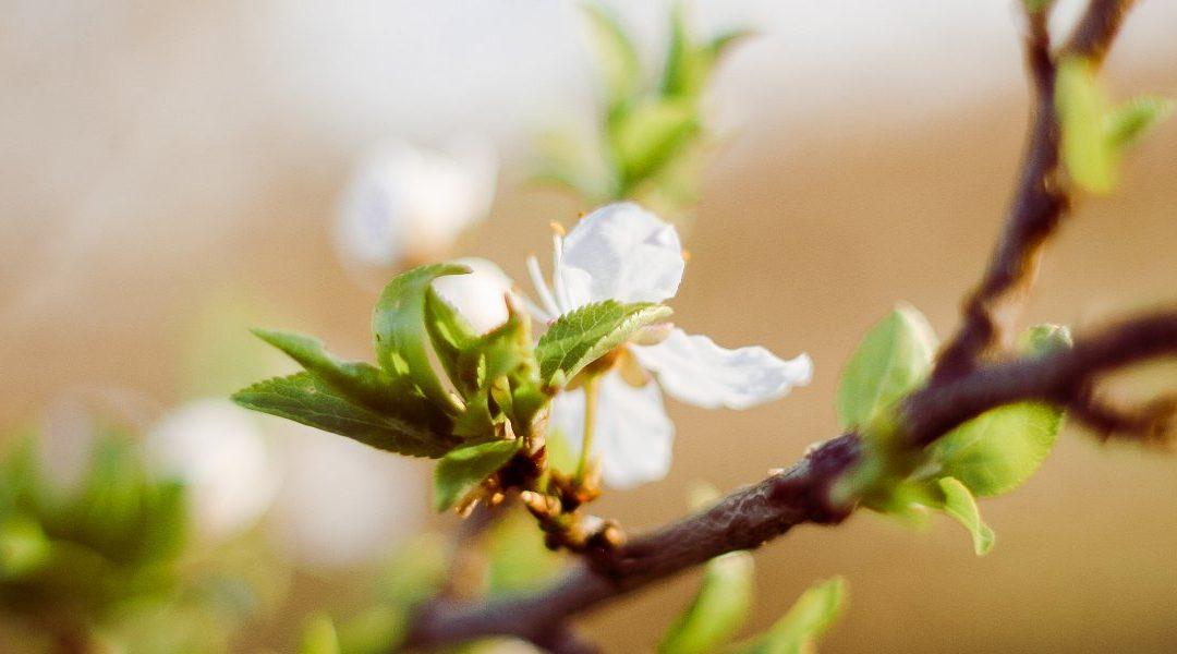 Een voorjaar